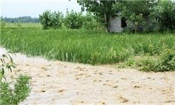 ناصرحیدری پوری: تجهیز ۸۶ هزار هکتار از اراضی کشاورزی به سیستم آبیاری نوین