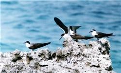 نشست مطبوعاتی مدیرکل محیط زیست هرمزگان بر روی دریا