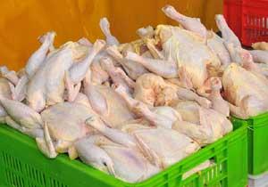 تامین گوشت مرغ برای ماه رمضان در بستک