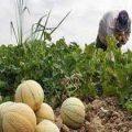 hormozban.ir-13950616-9