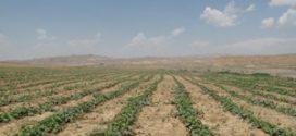 hormozban-ir-13950627-11