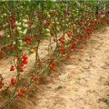 hormozban-ir-13950630-7