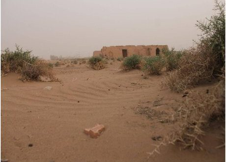 حبیب الله حاتمی:  قطع بیرویه درختان و استفاده از زمینهای کشاورزی عامل تشدید بیابانزایی در میناب