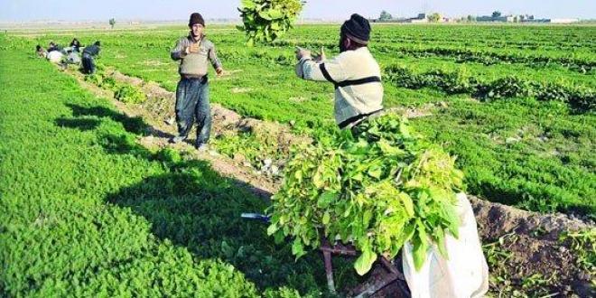 پرداخت خسارت بیمه کشاورزان هرمزگان تا پایان آبان