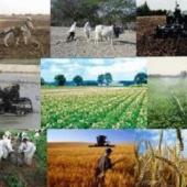 ثبت پنج طرح تحقیقاتی کشاورزی در هرمزگان