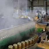 چرخ بزرگترین کارخانه تولید زیتون ایران در دستان آسیب دیدگان اجتماعی