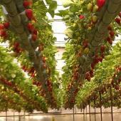 مجتمع گلخانه ای روستای «ستلو» با ورود بخش خصوصی ایجاد می شود