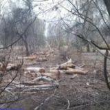 قلع و قمع درختان در روستای «دمشهر» + فیلم