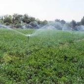 تاکید استاندار هرمزگان بر لزوم رعایت الگوی مصرف آب در کشاورزی