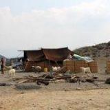 خروج دام عشایر إز مراتع قشلاقی شهرستان رودان