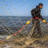 صید ۹۰۰۰ تن ساردین و ماهی موتو در هرمزگان