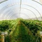 ۲۰۵ هکتار سطح گلخانههای هرمزگان