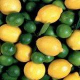 کشف بیش از هزار کیلوگرم لیموی خارجی در بندرعباس