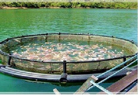 تولید ۵ هزار و ۹۰۰ تن ماهی در قفس در هرمزگان