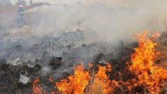 بخش قابل توجهی از آتشسوزی در منطقه حفاظت شده هرمد مهار شد
