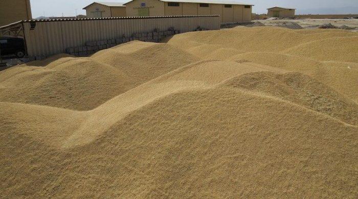 بیش از ۳۰ هزار تن گندم درهرمزگان خرید تضمینی شد